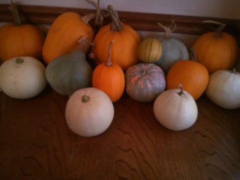 Fall Pumpkin Harvest 2014